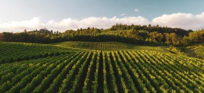 Vallée de Vipava, la plus belle région viticole de Slovénie