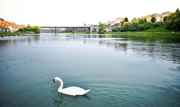 rivière Drava à Maribor